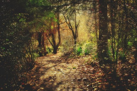 enchanted_forest_by_cathleentarawhiti-d32yz6x